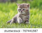 Stock photo tabby young cat or kitten in green grass 707441587