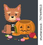 Stock vector icon of a yorkshire terrier dog in a sweatshirt with a skull around the puppy a halloween pumpkin 707449813