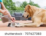 Woman Gives Her Labrador The...