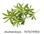 fresh sweet woodruff with... | Shutterstock . vector #707674903