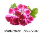scented geranium flowers... | Shutterstock . vector #707677087