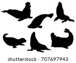 set of seals and sea calf... | Shutterstock .eps vector #707697943