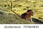 Baby Monkey On The Run