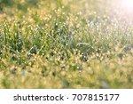 fresh green grass with dew... | Shutterstock . vector #707815177