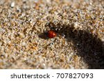 Lady Bug At The Beach