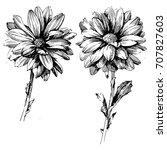 ink drawing flower vector... | Shutterstock .eps vector #707827603