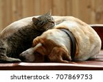 Stock photo cat and dog resting together 707869753