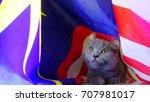 american curl kitten  with...   Shutterstock . vector #707981017