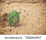 cactus   Shutterstock . vector #708006907