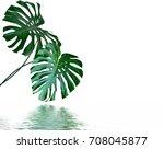 green leaf of a tropical flower ... | Shutterstock . vector #708045877