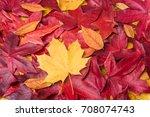 autumn leaves background....   Shutterstock . vector #708074743