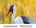 wattled crane adult in... | Shutterstock . vector #708121213