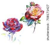 wildflower rose flower in a...   Shutterstock . vector #708171427