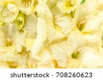 Stock photo flowers texture made of yellow gladioluses on wooden white background floral pattern of gladioli 708260623