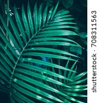 tropical palm leaves  dark... | Shutterstock . vector #708311563