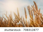 wheat field. gold mustache... | Shutterstock . vector #708312877