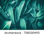 tropical leaves  dark green... | Shutterstock . vector #708330493