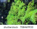 Small photo of Green Moss adhere a tree in the rain forest