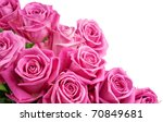 Stock photo pink roses isolated on white background 70849681