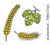 barley and wheat  malt and hops.... | Shutterstock .eps vector #708617263