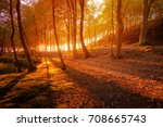 autumn scenery. beautiful gold... | Shutterstock . vector #708665743