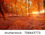 autumn scenery. beautiful gold... | Shutterstock . vector #708665773