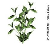the bush sketch vector graphics ...   Shutterstock .eps vector #708711637