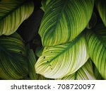 tropical leaves background   Shutterstock . vector #708720097