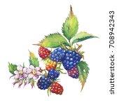 blackberry fruit  white flowers ...   Shutterstock . vector #708942343