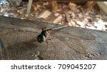 dragonfly | Shutterstock . vector #709045207