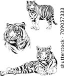 set of vector drawings on the... | Shutterstock .eps vector #709057333