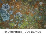 Arctic Lichens. Rock Surface...