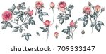 rose branches and buds isolated ... | Shutterstock . vector #709333147