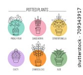 flowers in pots. potted plants. ... | Shutterstock .eps vector #709343917