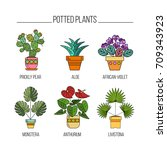 potted plants. isolated icons... | Shutterstock .eps vector #709343923
