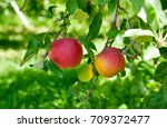 red apple | Shutterstock . vector #709372477