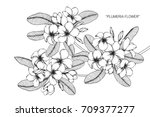 hand drawn and sketch plumeria... | Shutterstock .eps vector #709377277