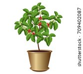 coffee tree in pot with beans... | Shutterstock .eps vector #709402087
