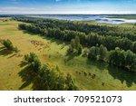 wild cows and horses in open... | Shutterstock . vector #709521073