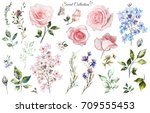 set watercolor elements of rose ... | Shutterstock . vector #709555453