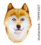 watercolor artistic orange dog... | Shutterstock . vector #709591027