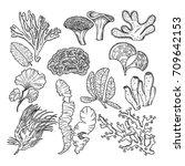 corals and underwater plants in ... | Shutterstock .eps vector #709642153