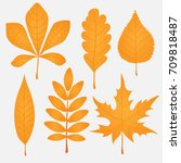 colorful autumn leaves set on... | Shutterstock .eps vector #709818487