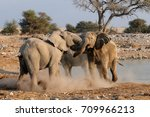 Small photo of African elephants are fight, etosha nationalpark, namibia, (loxodonta africana)