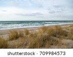 dune grass blowing in the wind  ... | Shutterstock . vector #709984573
