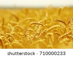 background of ripening ears of... | Shutterstock . vector #710000233