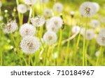 dandelions in sunset light... | Shutterstock . vector #710184967
