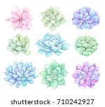 watercolor illustrations  ... | Shutterstock . vector #710242927