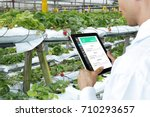 smart agriculture  farm  ... | Shutterstock . vector #710293657