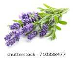 Stock photo lavender flowers on a white background 710338477